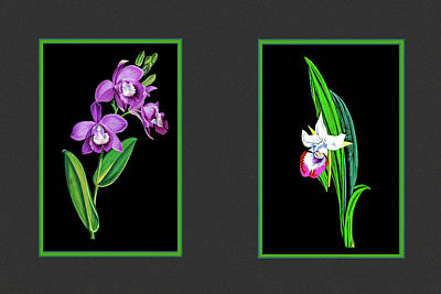 Photograph - Two Orchids by Tom Prendergast
