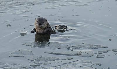 Photograph - Two Otters Fishing by Loree Johnson