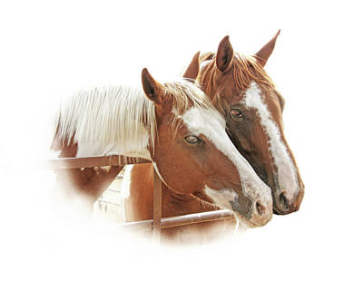 Photograph - Two Paint Breed Horses Portrait by Jennie Marie Schell