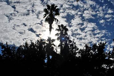 Photograph - Two Palm Trees - Backlit by Matt Harang