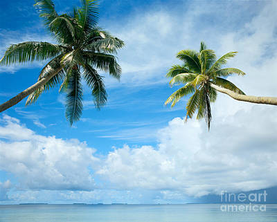 Two Palms, Turquoise Water Art Print by Mitch Warner - Printscapes