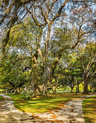 Two Paths Diverged In A Live Oak Wood 2 Art Print by Steve Harrington