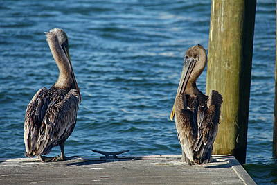 Photograph - Two Pelicans by Denise Mazzocco