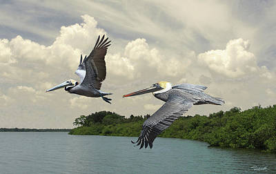 Digital Art - Pelicans Crossing Tampa Bay by Spadecaller