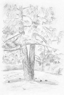 Drawing - Two Pine Trees by Masha Batkova