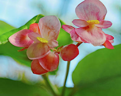 Pink Photograph - Two Pink Flowers No. 2 by Sandy Taylor