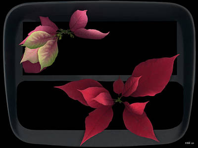 Photograph - Two Poinsettias by Heather Kirk