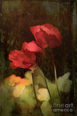 Two Poppies Art Print by Elaine Teague