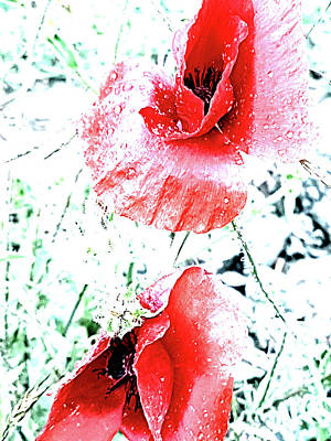 Photograph - Two Poppies by Lali Kacharava