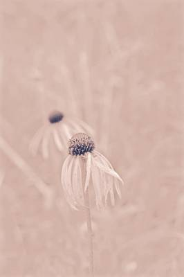 Photograph - Two Prairie Flowers by Photography by Tiwago