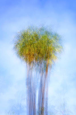 Photograph - Two Pretty Palms by Joseph S Giacalone