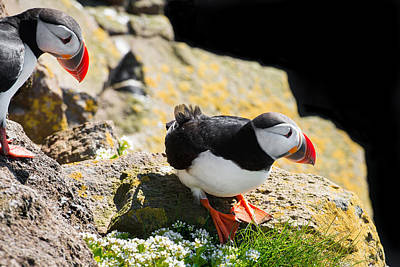 Photograph - Two Puffins In Iceland by Matthias Hauser