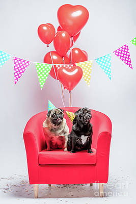 Photograph - Two Pugs Dogs With Birthday Decorations. by Michal Bednarek