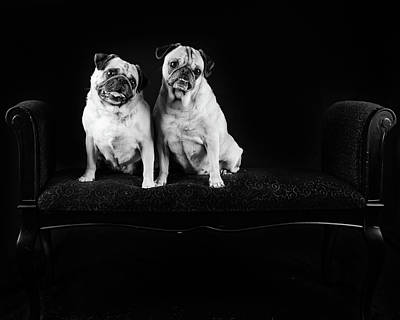 Photograph - Two Pugs by Tammy Ray