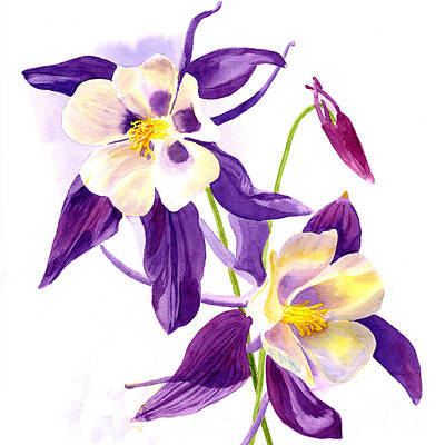 Blooming Painting - Two Purple Columbine Flower Square Design by Sharon Freeman