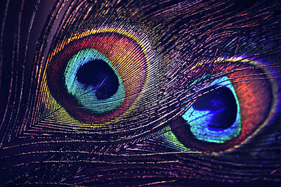 Photograph - Two Purple Peacock Feathers by Jenny Rainbow