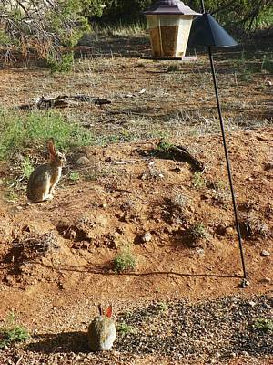 Photograph - Two Rabbits And Bird Feeder by Joseph Frank Baraba