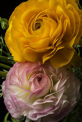 White Ranunculus Flower Photograph - Two Ranunculus by Garry Gay
