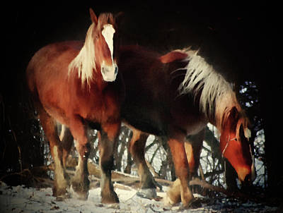 Digital Art - Two Red Horses  by Georgiana Romanovna