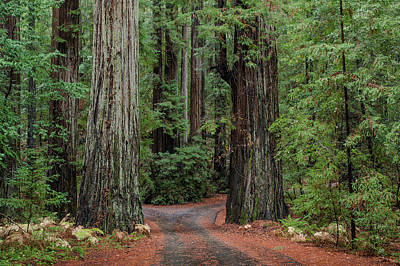 Photograph - Two Redwoods And A Road by Greg Nyquist