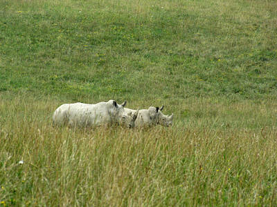 Two Rhino In The Grass Art Print by George Jones