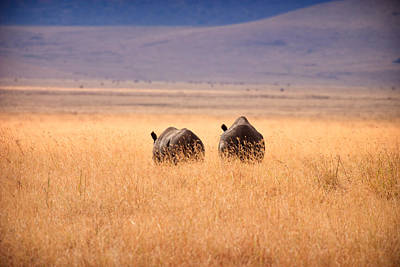 Photograph - Two Rhino's by Adam Romanowicz