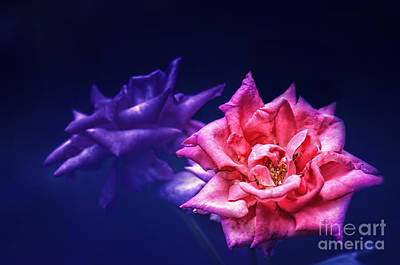 Photograph - Two Roses by Charuhas Images