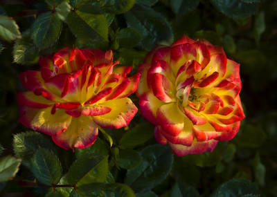 Railroad - Two Roses by Svetlana Sewell
