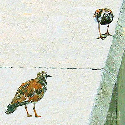 Photograph - Two Ruddy Turnstone Birds by Merton Allen