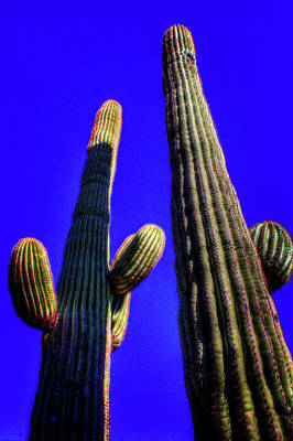 Photograph - Two Saguaros Against Blue Sky by Roger Passman
