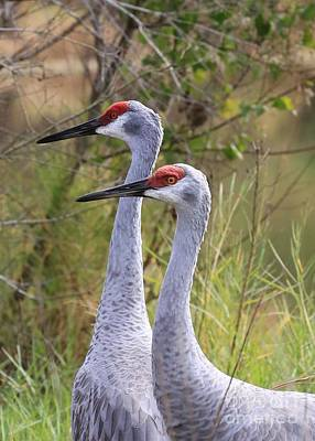 Crane Photograph - Two Sandhills In Green by Carol Groenen