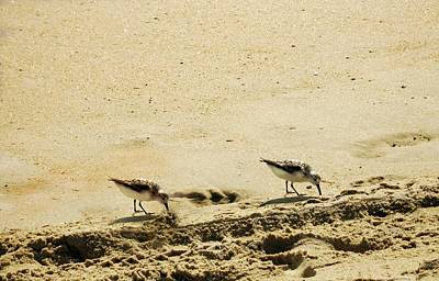 Photograph - Two Sandpipers At Obx by Kathy Barney