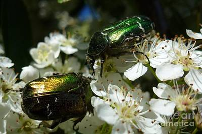 Print featuring the photograph Two Scarabs Metallic Green by Jean Bernard Roussilhe