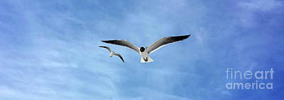 Photograph - Two Seagulls Against A Blue Sky by Jeanne Forsythe