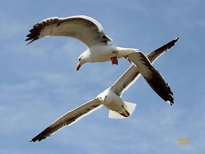 Two Seagulls Almost Collide  Art Print