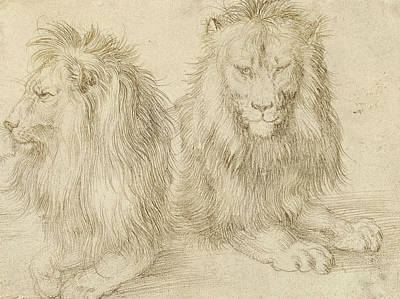 Drawing - Two Seated Lions by Albrecht Durer