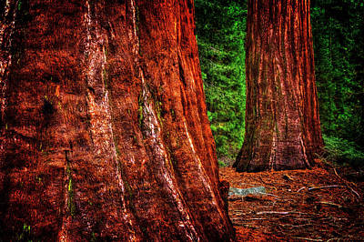 Photograph - Two Sequoias At Grants Grove by Roger Passman