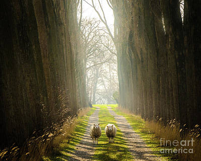 Photograph - Two Sheep On A Glorious Path by Alexandre Rotenberg