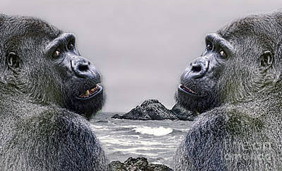 Photograph - Two Silverback Gorillas  by Jim Fitzpatrick