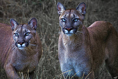 Photograph - Two Sisters by Chris Lord
