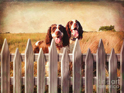 Breed Digital Art - Two Spaniels Exploring  by L Wright