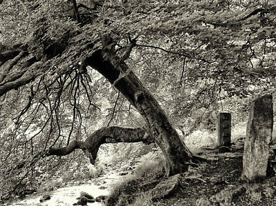 Megalith Photograph - Two Stones And A Tree by Philip Openshaw