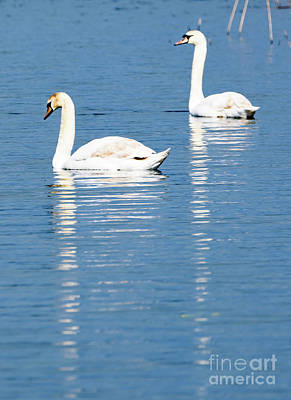 Photograph - Two Swans by Colin Rayner