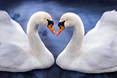 Two Swans Art Print by Simon Kayne