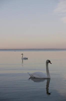 Two Swans Art Print by Stanislovas Kairys