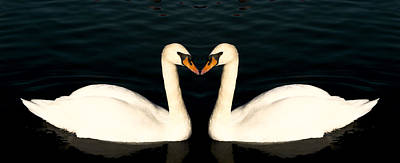 Two Symmetrical White Love Swans Art Print