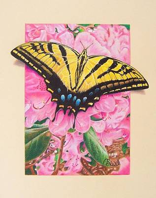 Two Tailed Drawing - Two-tailed Tiger Swallowtail by Robert Sewell