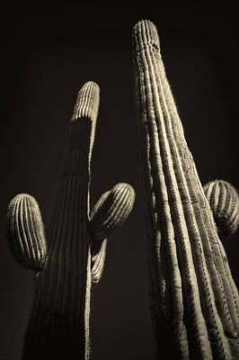 Photograph - Two Tall Saguaros by Roger Passman