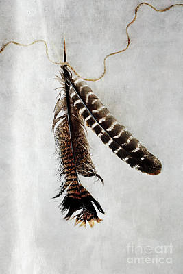 Photograph - Two Tattered Turkey Feathers by Stephanie Frey