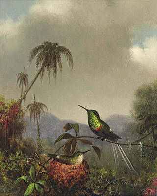 Thorn Tail Painting - Two Thorn-tails. Langsdorffs Thorn-tail. Brazil by Martin Johnson Heade